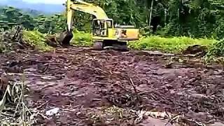 land clearing di rawa