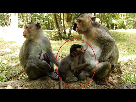 Xxx Mp4 Big Baby Drink My Baby Milk ST784 Mono Monkey 3gp Sex