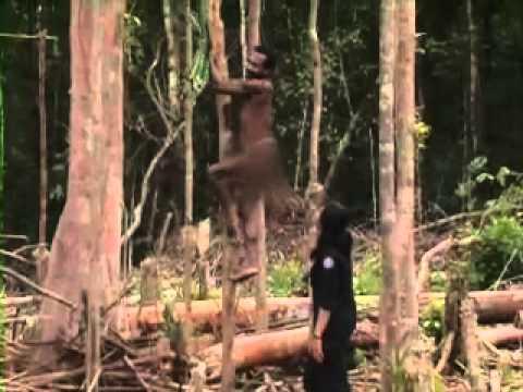 Asmat Mengenal Lebih Dekat Suku Korowai di Pedalaman Papua IndonesiaKu Trans7