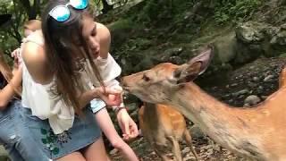 Nara Park- Japan- Osaka- deers-sarny sarenki