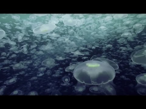 Xxx Mp4 Open Ocean 10 Hours Of Relaxing Oceanscapes BBC Earth 3gp Sex