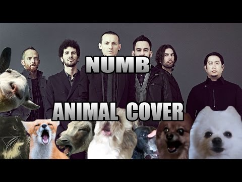 Linkin Park Numb Animal Cover