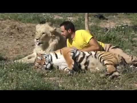 yo un tigre y un leon