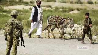 Afghan donkey bomber kills three US soldiers