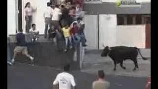Dangorous Bulls