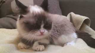 Grumpy Cat ^Slow Motion