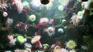 The Phylum Cnidaria - Documentary