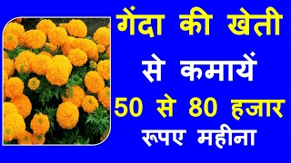 Marigold cultivation business earn 50 to 80 thousand Rs month-गेंदा की खेती