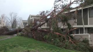 Powerful storm takes out trees in Santa Clarita