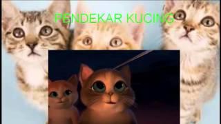 Pendekar Kucing Video 3gp Mp4 Flv Hd Download