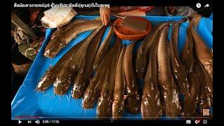 ตีหม้อเคาะกระทะEp8 คั่วกะทิปลามิหลัง(ดุกเล)กับใบชะพลู