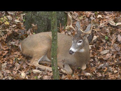 Xxx Mp4 Top 5 Deer Hunting Myths 3gp Sex