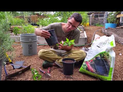 Starting Fruit Trees with Cuttings: My Garden Experiment