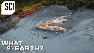 Hundreds of Dead Whales Washed Up on the Shore | What On Earth?