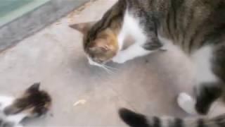 Anne kedinin yavruları için insana örnek olacak fedakarlığı