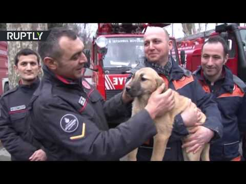Xxx Mp4 Lucky Puppy Turkish Firemen Rescue Dog From 70 Metre Well After 10 Days 3gp Sex
