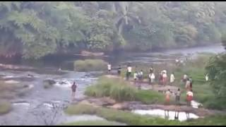 Elephant  crossing kunthi river in mannarkkad