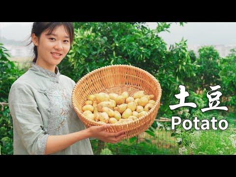 新挖的土豆不用剥皮,做成各种美味的小吃,薯条是我的最爱,� �喜欢吃吗 A variety of delicacies made from potatoes