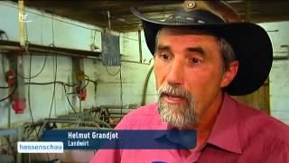 5977 economics agriculture 017 002 HR Milchpreise sinken, Milchbauern leiden