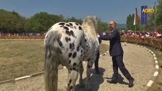 Конете на България: Животновъдно изложение в Сливен събра елитни породи коне...