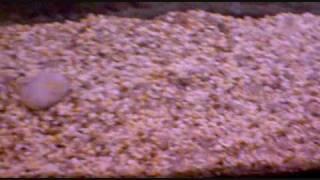 200 Litre Aquarium Fish Tank (Update Beginning Start-Up)