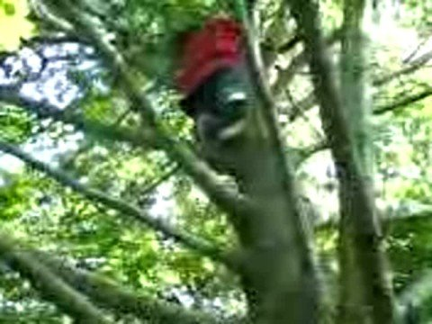 xxxxx in a huge tree at the silver lake hill {HILLARIOUS}