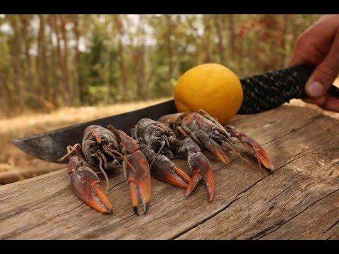 Xxx Mp4 Freshwater YABBIES Catch N Cook TDB 3gp Sex