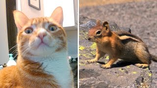 BEST Video For Cats Ever!