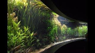 11000L Aquarium - Asia biotop.