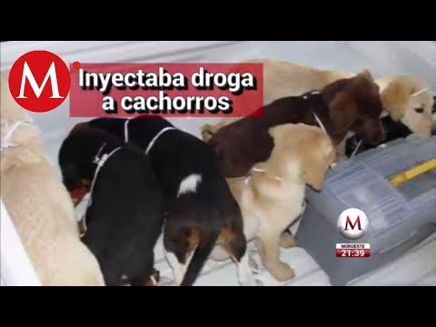 Xxx Mp4 Veterinario Implantaba Heroína A Perros Para Traficar 3gp Sex