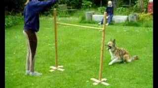 The best jumping dog you'll ever find