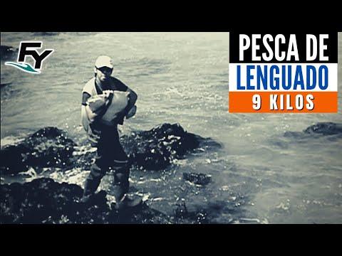 Lenguado 9 5 kg DEVUELTO Pesca Sustentable Capítulo 3 pescachilena.cl