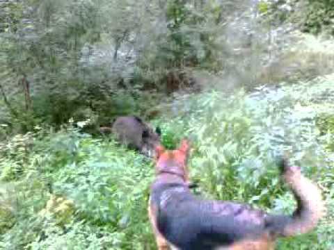 Walka z dzikiem