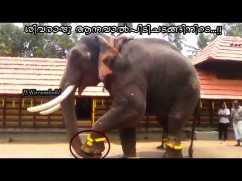 Xxx Mp4 Thrikkadavoor Shivaraju In Aanavalpidy 2014 3gp Sex