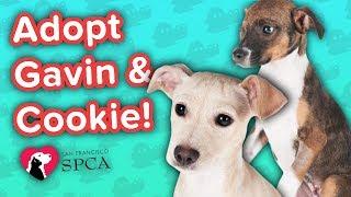 Adopt Gavin & Cookie! // Terrier Mix // Adoption Featurette