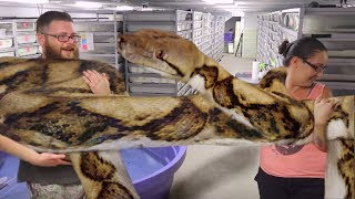 HOW TO HANDLE THE LARGEST SNAKE IN THE WORLD! Brian Barczyk