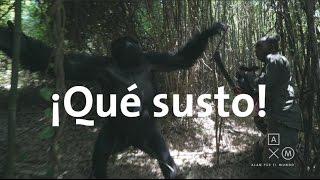 Los gorilas nos sacaron un susto!   Uganda y Ruanda #7