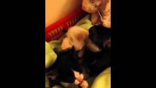 Kittens after eating Day 1 01.10.2015