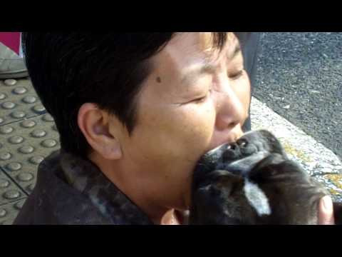 Japanese Woman Eats Dog Raw at an Intersection in Japan.