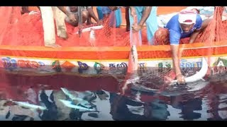 Kerala Deep Blue Sea Fishing | Huge Fish Harvest | HD | India