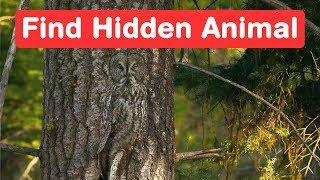 Find the Hidden Animals - Genius Eyes Challenge - Optical Illusion