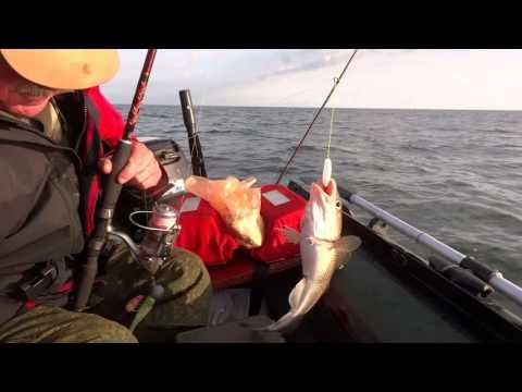 чем ловить треску на заливе