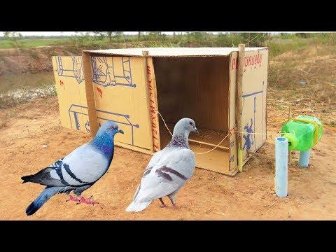 Easy Bird Trap Simple DIY Creative Bird Trap make from water bottle N Cardboard That Work 100