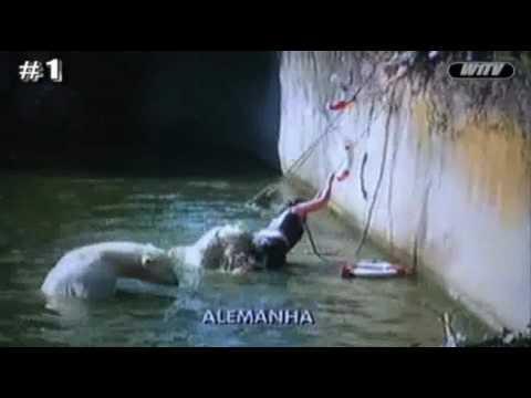 Bear attack Mulher é atacada por urso polar no zôo de Berlim