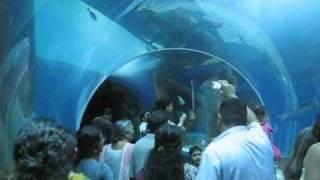 Visit to Sharjah Aquarium
