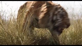 El Libro de la Selva (The Jungle Book) - Trailer español (HD)