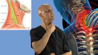 90-Second Relief Technique for a Stiff Neck (Wry Neck, Torticollis)- Dr Mandell
