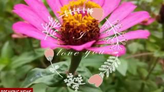 Video 20161215121429237 by videoshow