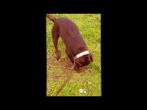 Hund buddelt wie verrückt was dann geschah ahnte keiner !