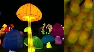 صور مهرجان المصابيح الصينية في نيويورك   #بي_بي_سي_ترندينغ